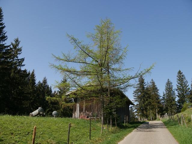 Wanderweg bei der Kurklinik in Oy-Mittelberg