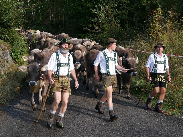 Herde von der Alpe Hinteregg beim Viehscheid Bolsterlang 2018