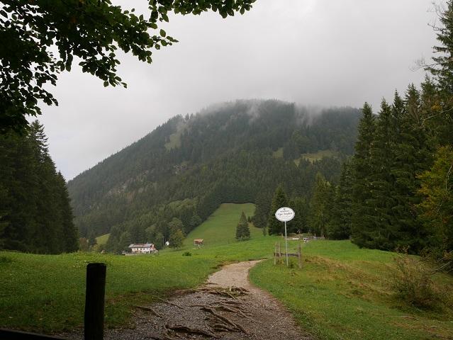 Weg zur Alpe Topfen am Grünten