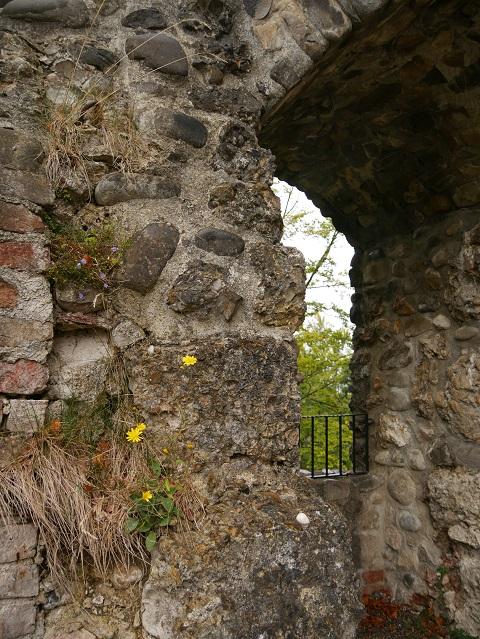 Blüten aus Ruinen in der Alttrauchburg