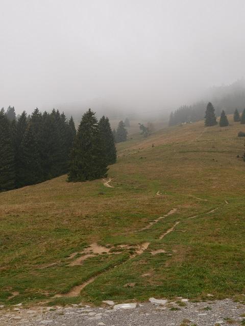 Wanderweg zur Oberen Schwandalpe am Grünten