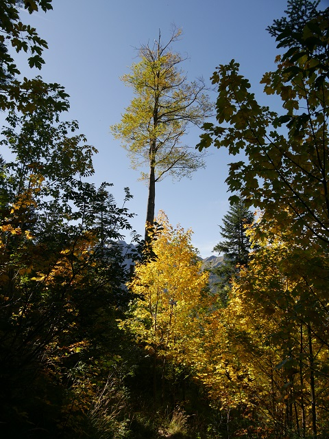 Abstieg durch den Bergwald bei Willersalpe