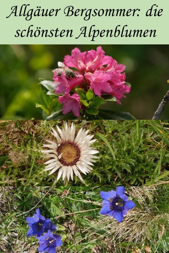 die schönsten Alpenblumen im Allgäu