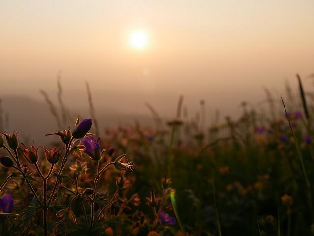 Bergblumen im Sonnenuntergang