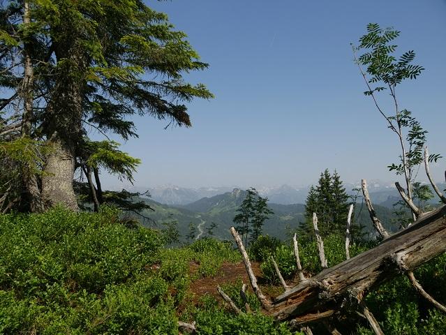 Blick auf den Riedbergpass und den Besler vom Hochschelpen aus