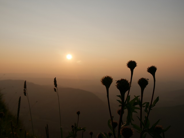 Blümchen im Sonnenuntergang