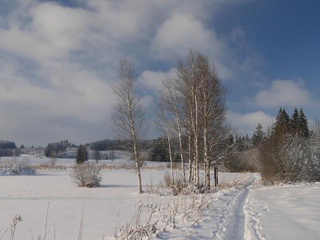 Moorlandschaft im Winter am Elbsee