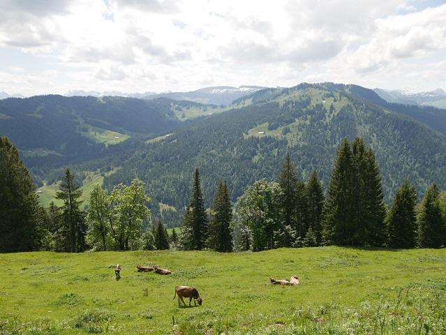 Panoramablick von der Alpe Vordere Stillberg