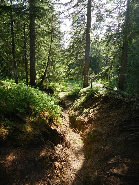 Waldwanderweg vom Hochschelpen zur Burgl-Hütte