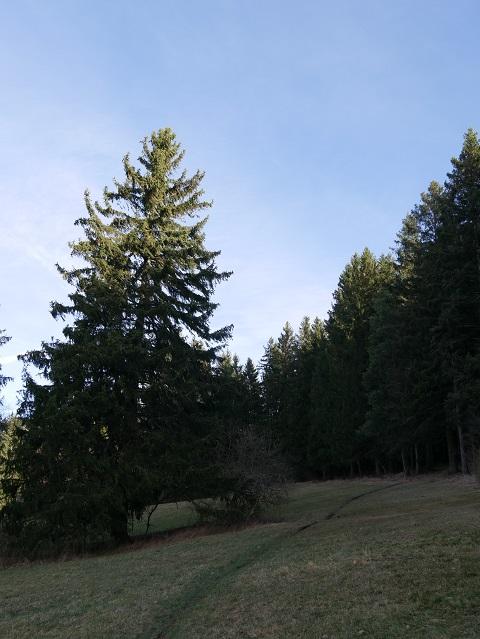 Wanderpfad zur Bergmang Alpe