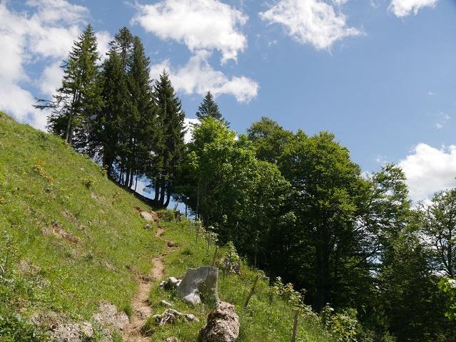 Wanderpfad bei Balderschwang