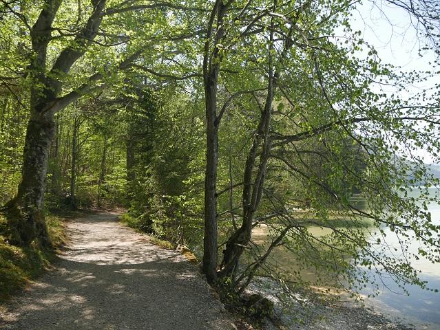 Wanderweg am Weißensee-Südufer
