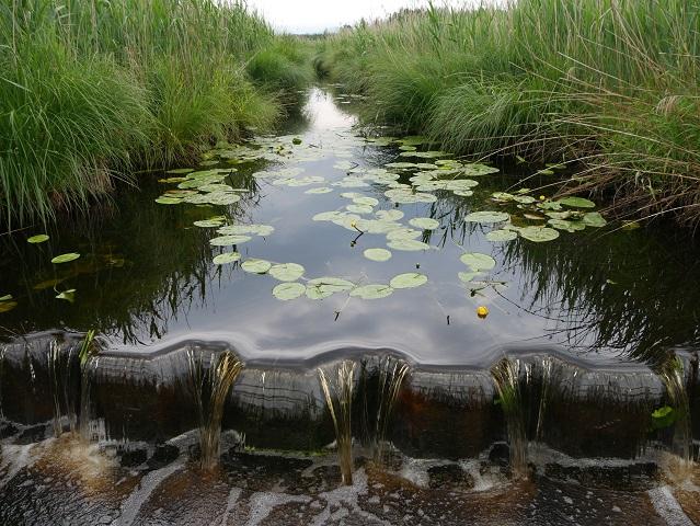 Wasserlauf mit Teichrosen im Elbseemoor