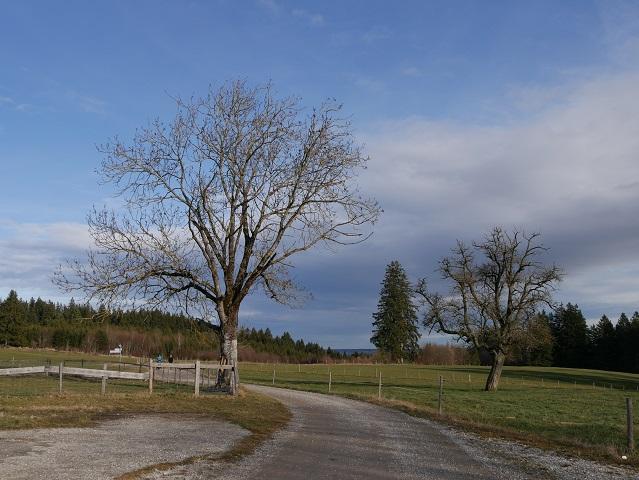 Wanderung zur Bergmangalpe - auf dem Rückweg
