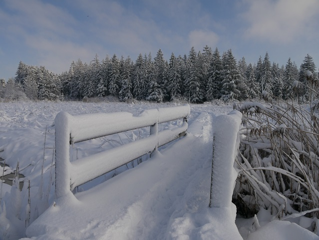 Elbseemoor im Winter