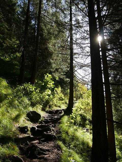 Wanderweg durch den Bergwald bei Hinterstein