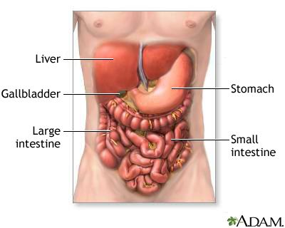 Hepatitis: Types, Causes, Effects On The Body, Treatment And Prevention