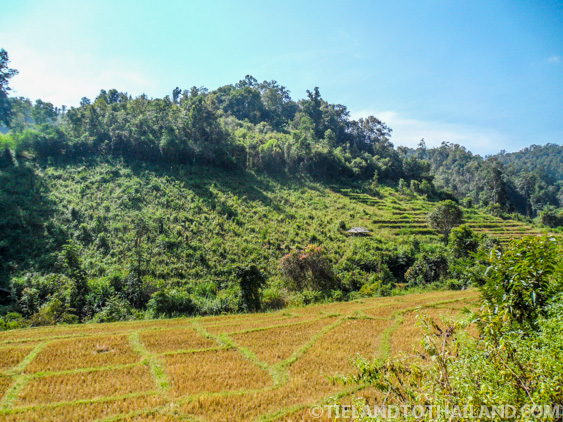 Rice fields and hillsides