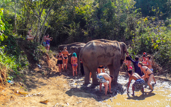 Mud bath at Elephant Jungle Sanctuary