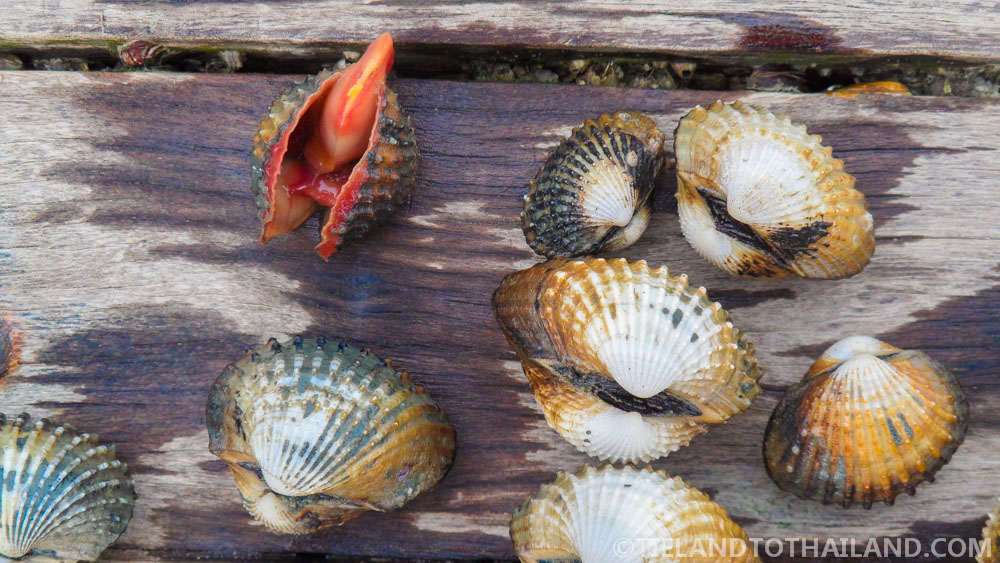 Trip to Samut Songkhram: Clam Digging