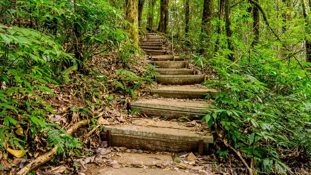 Hiking paths during our trip to Doi Inthanon