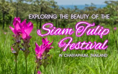 Exploring the Beauty of the Siam Tulip Festival