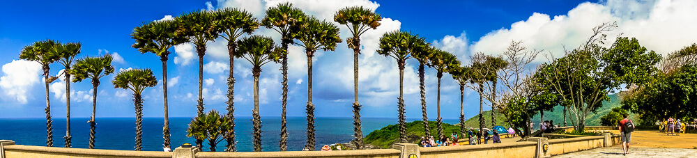 Sky high palm trees at Phromthep Cape in Phuket, Thailand