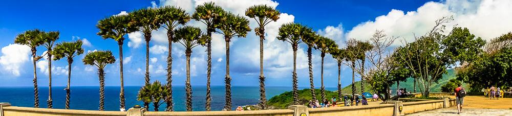 Sky high palm trees at Phromthep Cape in Phuket, Thailand