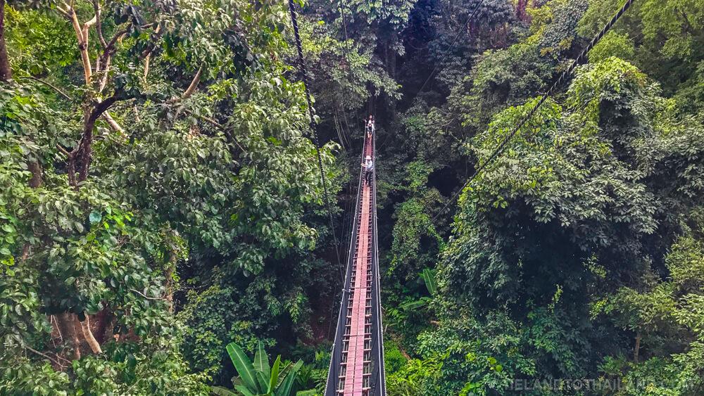 Long bridge at Doi Tung Tree Top Walk