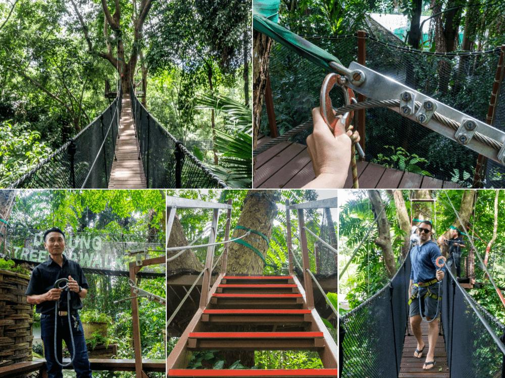Doi Tung Tree Top Walk at Mae Fah Luang Garden