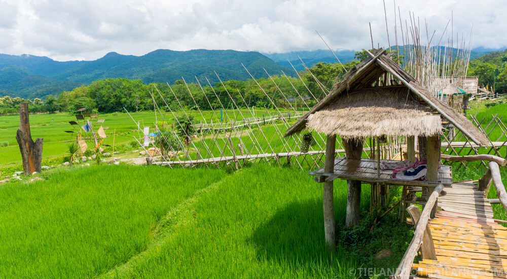 Rice fields at Ban Tai Lue Cafe