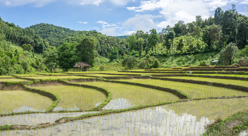 Exploring terrace rice fields in Chiang Mai