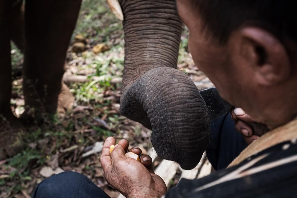 Feeding elephants in Chiang Mai, Thailand