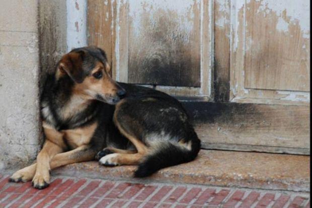 27 de julio es el Día del Perro Callejero