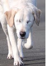 Consejos para cuidar un perro ciego