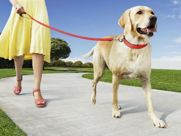 7 Pasos para pasear a tu perro