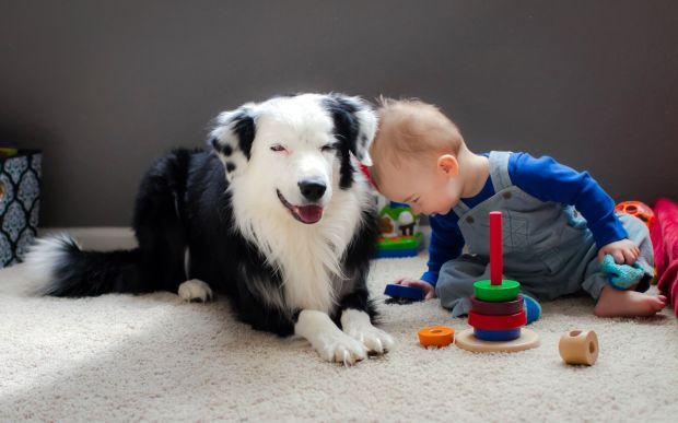 como evitar el abandono de mascotas