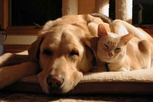 Consejos para cuidar a tu mascota en la vejez