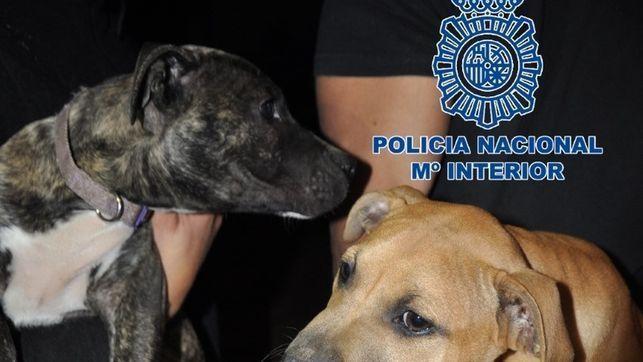 Organización que se dedica a realizar peleas de perros, te hará perder la fe en la humanidad