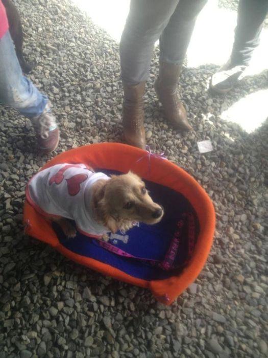 Nenita adoptada ayer en el Festival de adopciones