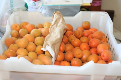 Blenheim and Patterson apricots