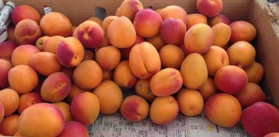 flat of apricots