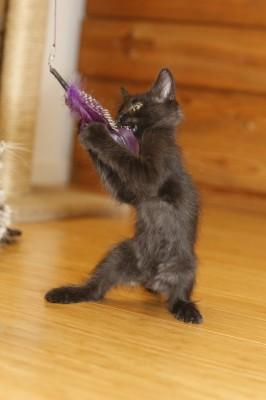 Fritz practices kitten-fu!