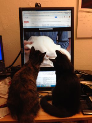 Cat TV?