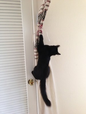 Fritz the Incredible Flying Kitten!