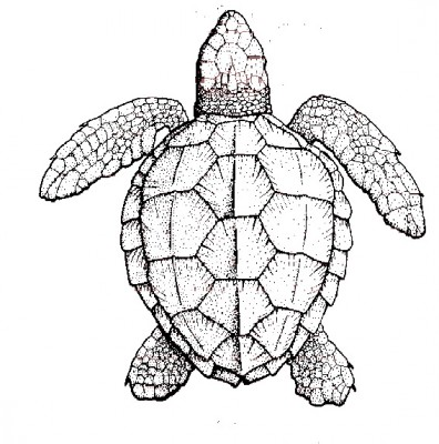sea turtle, original image