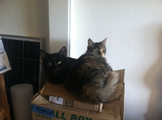 two kittens in a box!
