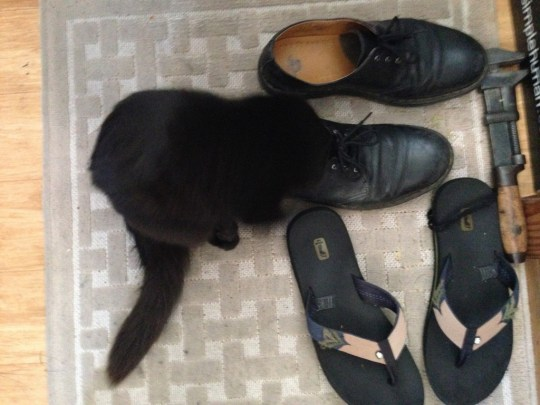 Fritz exposing his secret shoe fetish!