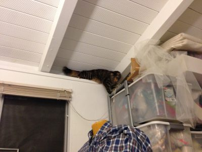 Tigress makes it to the shelves