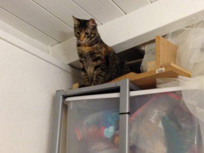 Tigress surveying her dominion